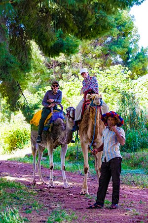 Half day Camel ride, half day hiking in the Atlas Mountains.